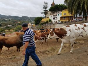 Un aspecto de la feria de ganado