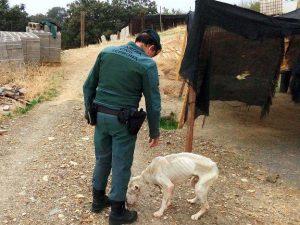 Un agente ante un perro desnutrido