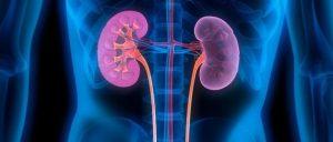 Recreación en imágenes de los riñones