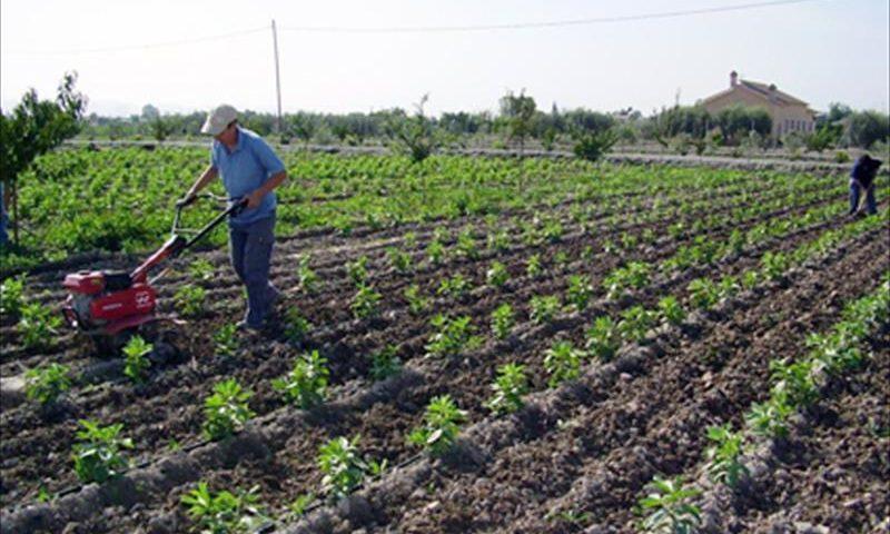 Un campesino realiza sus labores en una finca de agricultura ecológica