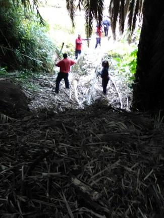Operarios retirando hojas secas de palmeras